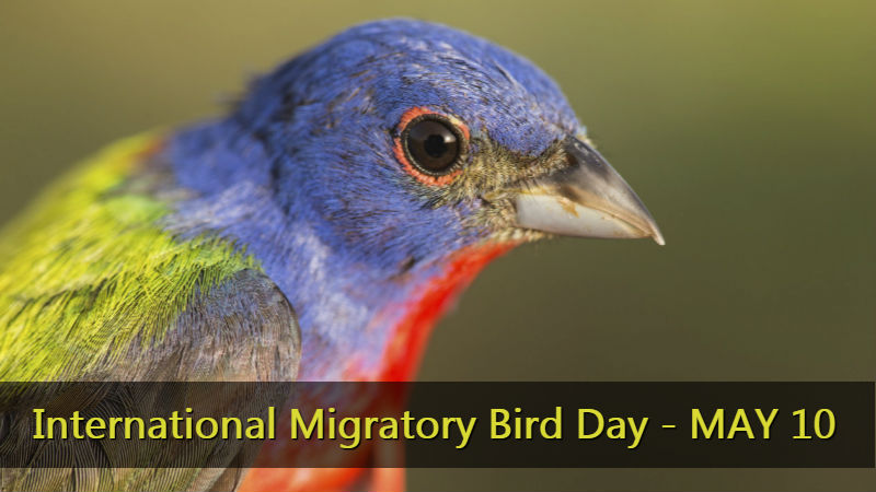 Migratory Bird Day - May 10
