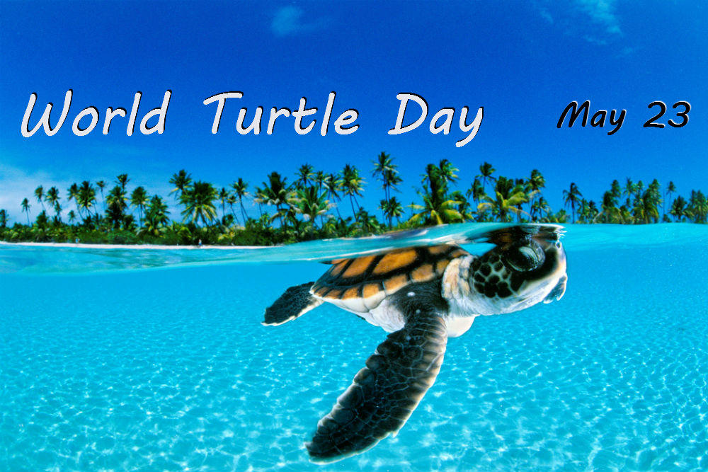 Turtle day - May 23