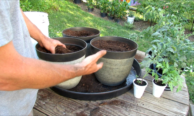 4 Ways to Save Water in Your Garden