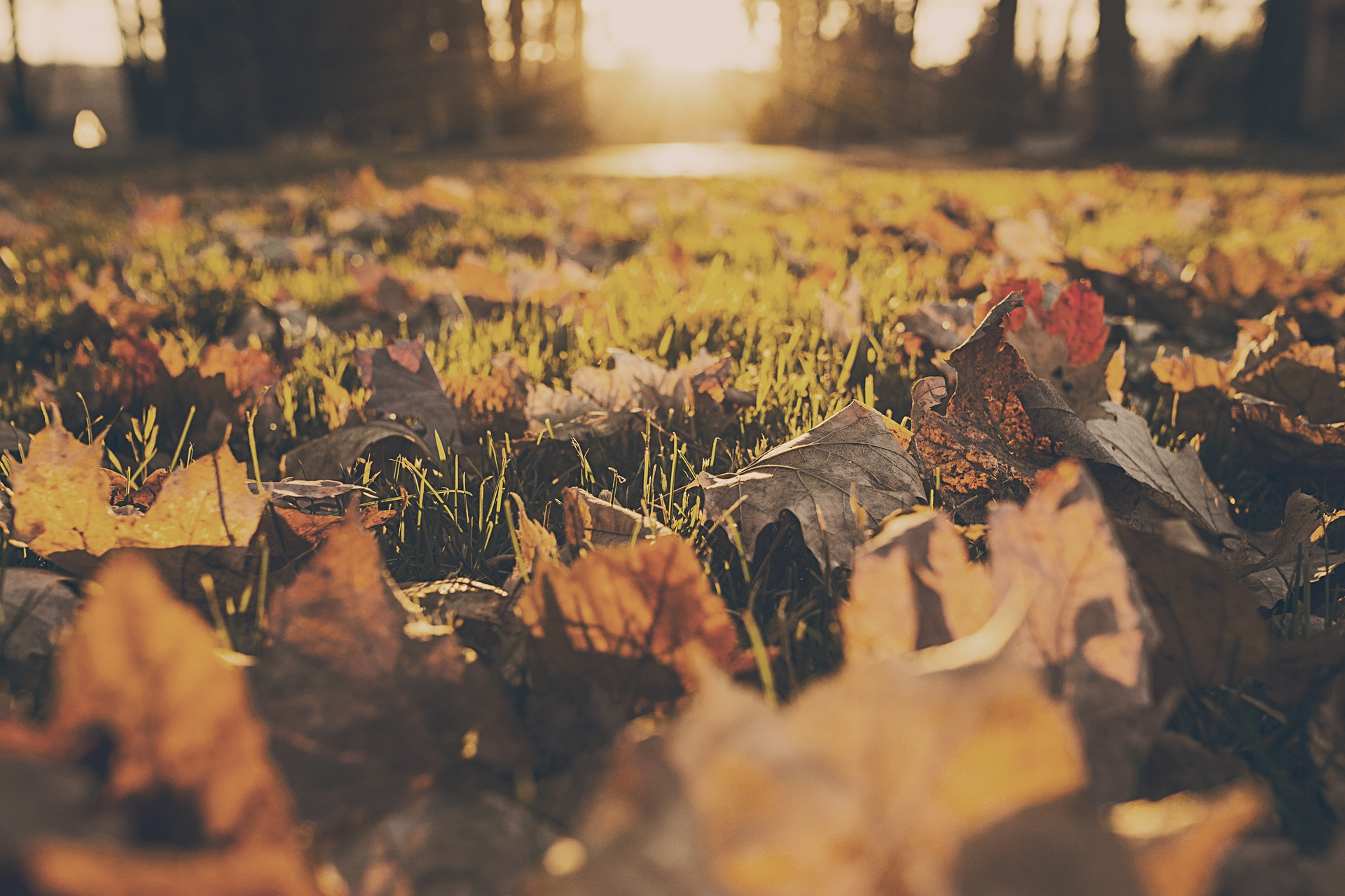 5 Tips for Early Fall Lawn Care and Fall Cleanups