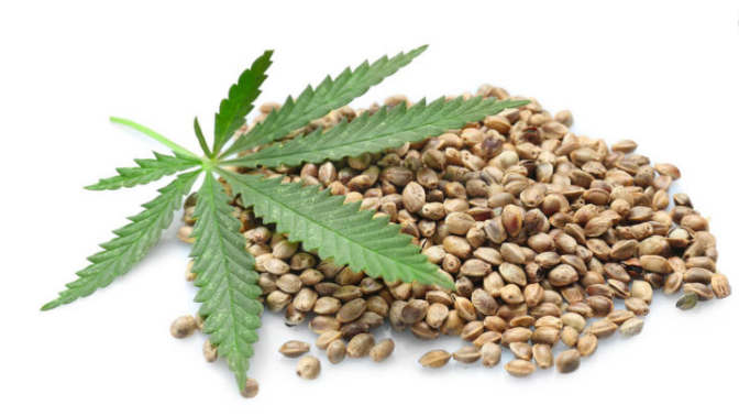15 Amazing Benefits of Hemp Protein